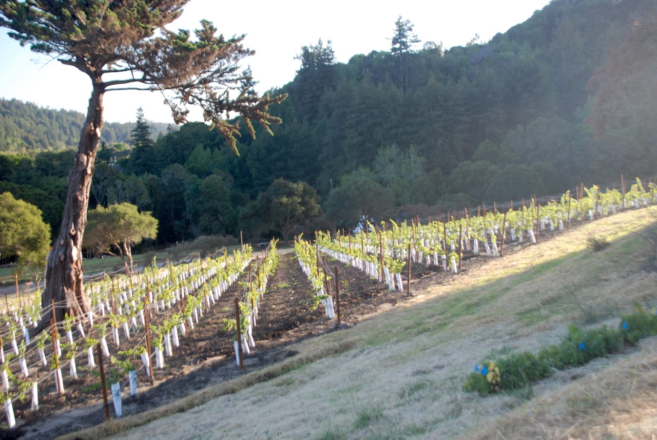 Toyon Vineyard Pinot Noir